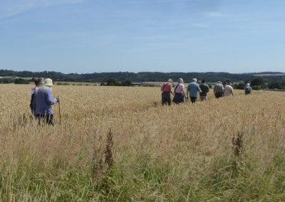 Walkers in wheat field Eardington 2017