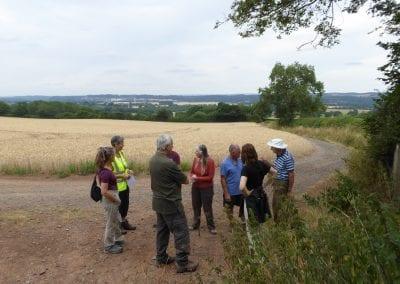 Walkers by wheat field, Uplands